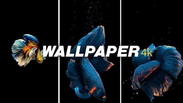 Live Fish Wallpaper app